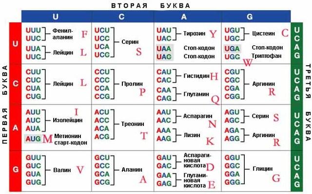 Словарь терминов и понятий по биологии для ЕГЭ